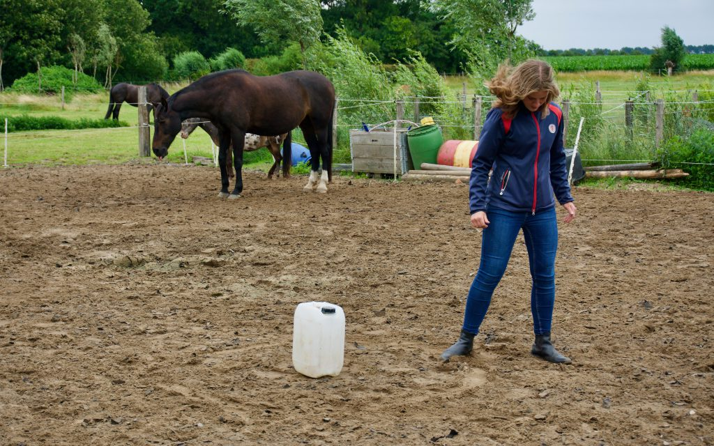 Recensies paardencoaching