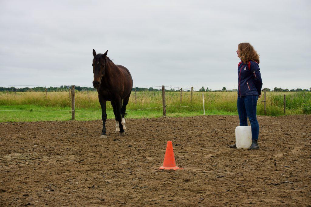 Recensie paardencoaching